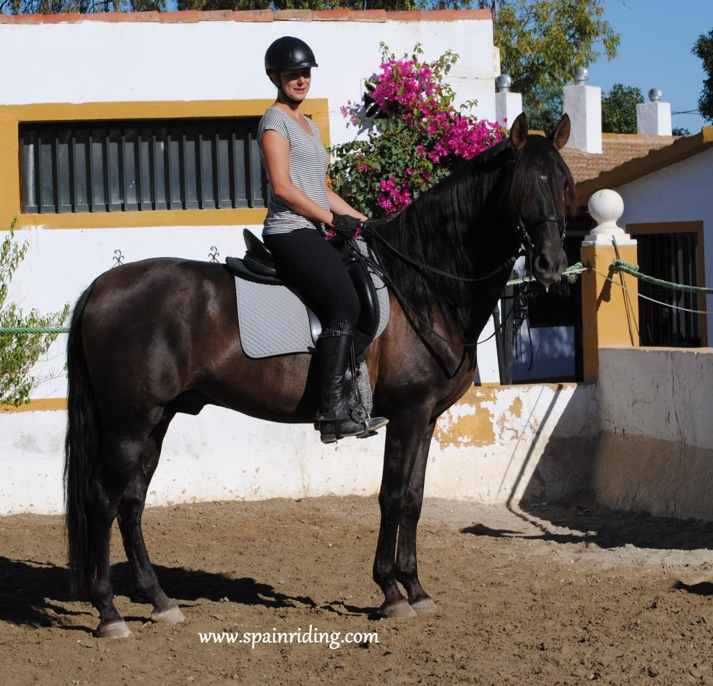 Horseback riding, Spain, Liberty training,